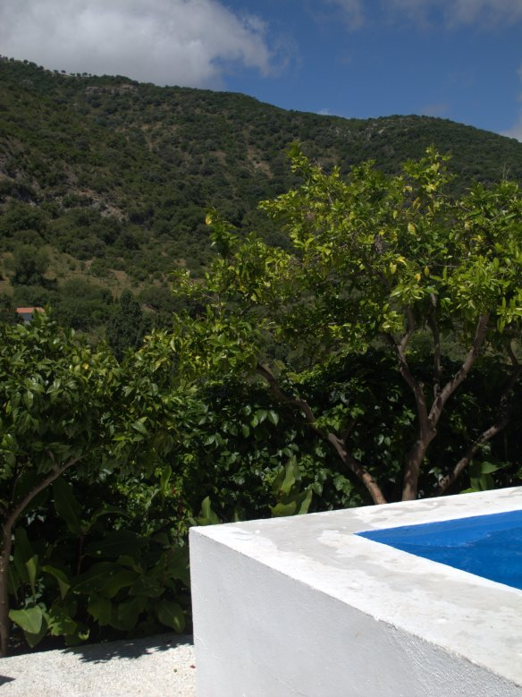 The swimming pool is surrounded by citrus trees, and beyond are hills and sky.