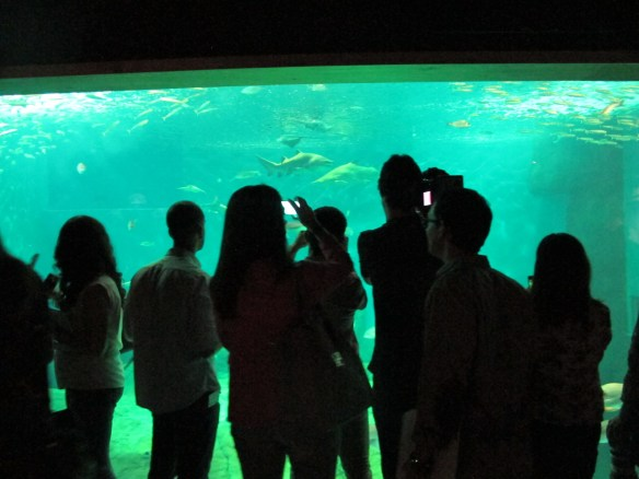 Press getting their first view of the shark tank.