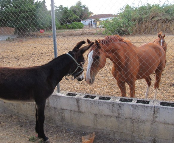 Bolly meets the horses next door.