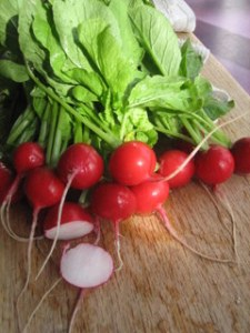 Seabreeze Radishes