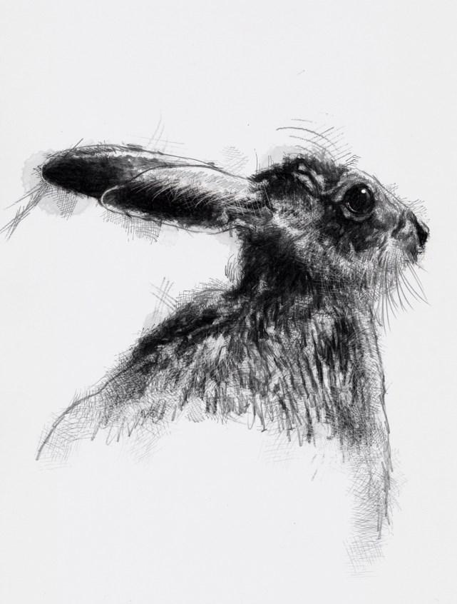 British hare