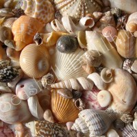 Identifying Your Seashells, Where to Start?