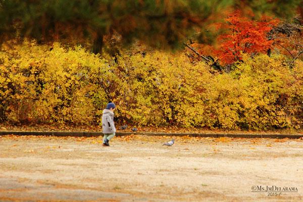 Autumn Kid Pigeon Bird Travel