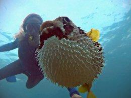 Renee Blundon with a Puffed-up Pufferfish 1024 x 768