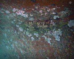 Filefish on Barnacled Boat 1280 x 1024