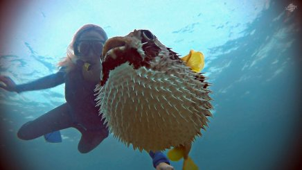 Renee Blundon with a Puffed-up Pufferfish 1920 x 1080