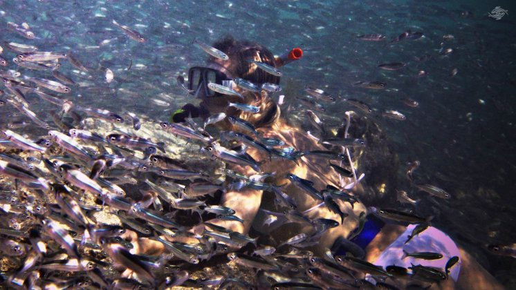 Renee Blundon Surrounded by Silver Cyprinids 1920 x 1080