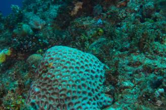 A view of corals on the wall