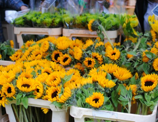 sun flowers at Columbia Road flowers market