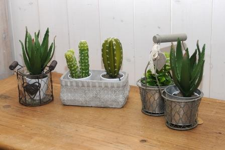 avec les cactus mettez du piquant dans votre d co. Black Bedroom Furniture Sets. Home Design Ideas