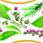 Sedef Hastalığının Bitkisel Tedavisi