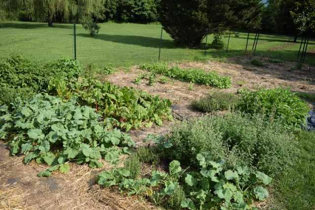End of June Garden