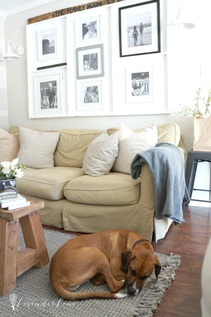 rugsusa rug and sleeping dog