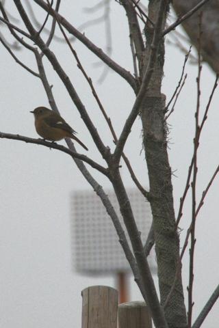 野鳥1.jpg