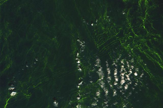 Naturphänomen, Algen, Sentinel2, Satellit