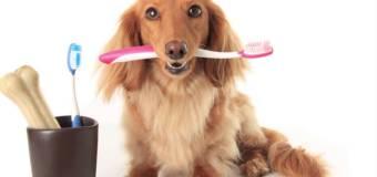 Consejos para la salud bucal de tu mascota
