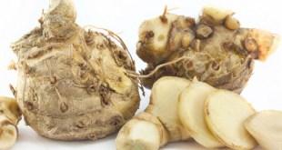 Sehat Alami -Curcuma-xanthorrhiza-Roxb -Temulawak