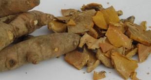 Sehat alami - Temulawak herba - untuk asam urat