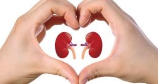 Foto | www.kidneyremedies.com