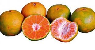 jeruk