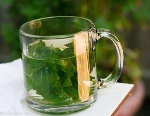 herbatka z bazylii