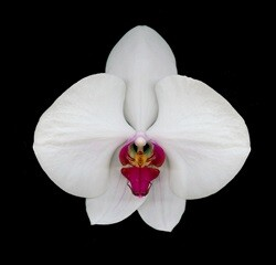 David Leaser's Award-Winning Flower Portraits Featured In A Special Exhibit