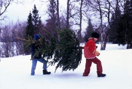 """イケアのクリスマスツリーは""""本物のモミの木""""!至れり尽くせりの「回収サービス」も"""