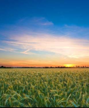 Agriclture_Australia-Japan