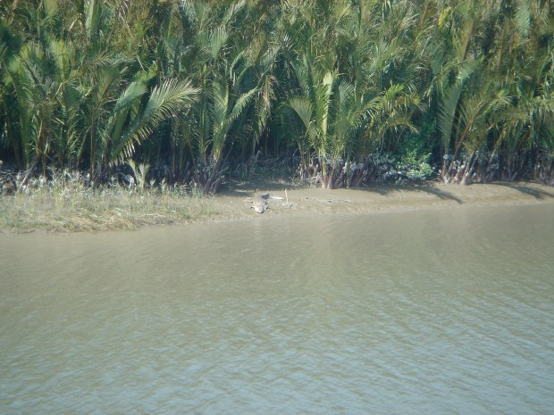 Essay on sunderbans