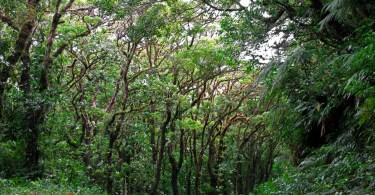 bosques costa rica 5