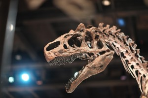 dinosaur-241962_640