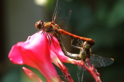 dragonfly-1843061_1920