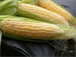 maize3