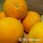 Juicing_oranges_sgo