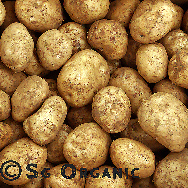 SG Organic Potatoes  Sebago