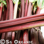 sweet tart organic rhubarb