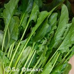 english spinach_sgo