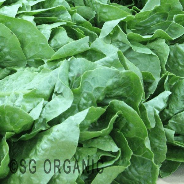 lettuce romaine 500g