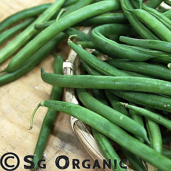 SG Organic round beans