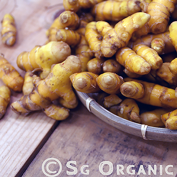 Main ingredient in curry powder, the turmeric contains curcumin which has strong anti-cancer properties