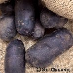Potato-Purple