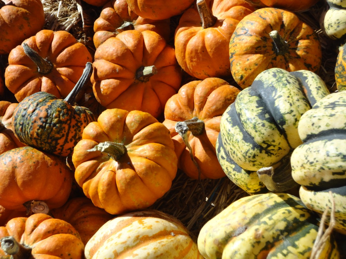 Our Fall Family Needs Were Filled at Fifer Orchards