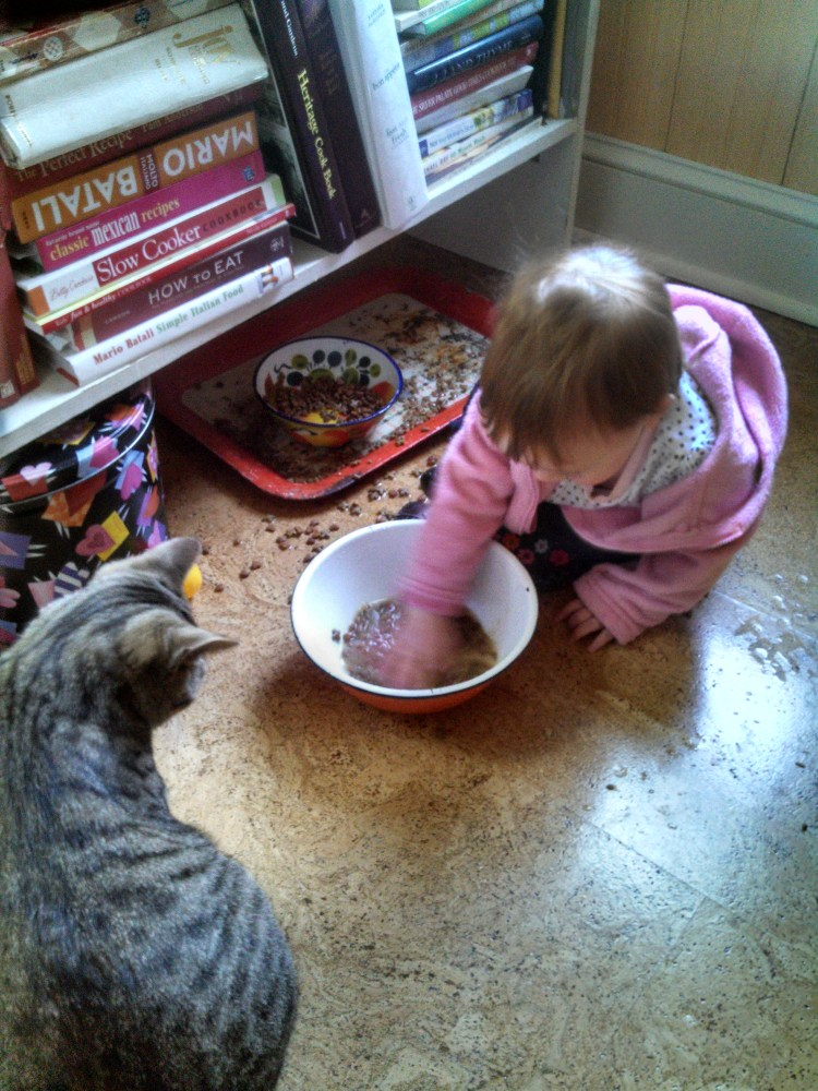 Playing in the cat food on Shalavee.com