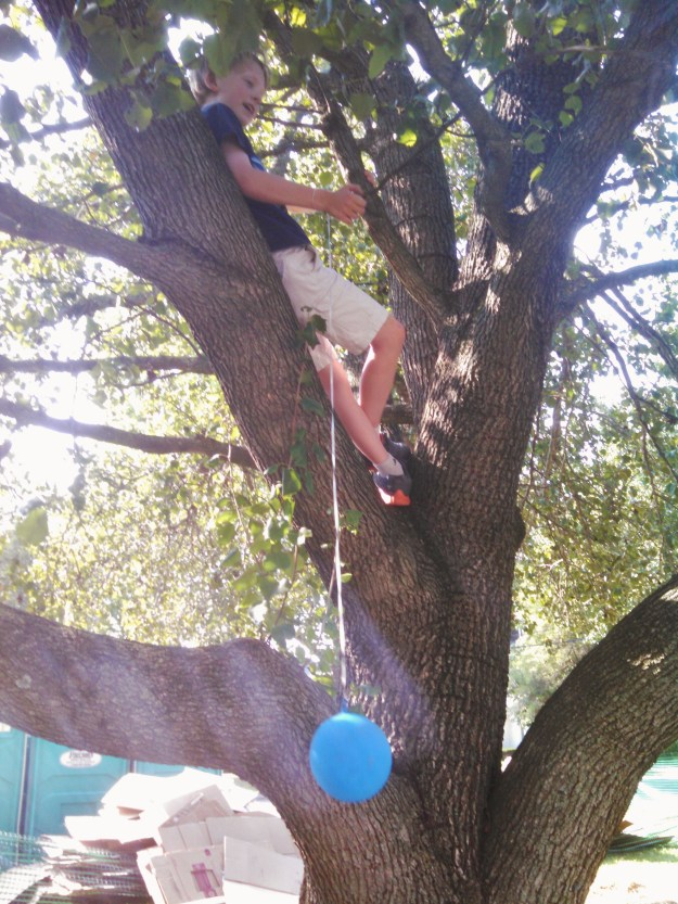 Up a tree from Summerfestive on Shalavee.com