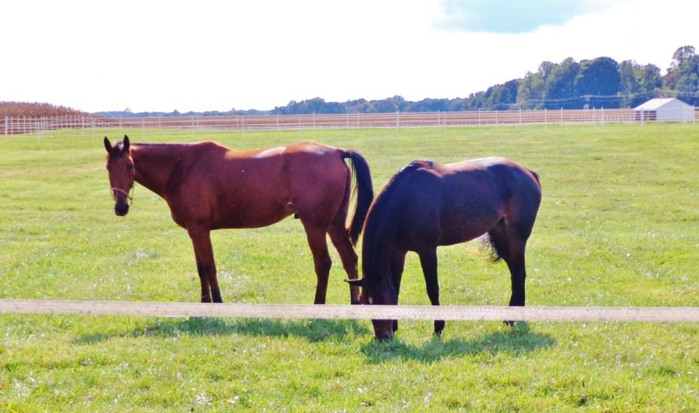 Horses on Eastern Shore farmland on Shlavee.com