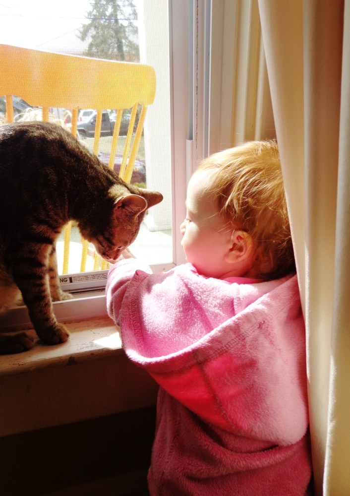 1 yr old Fiona and Mr Crackers in the window on Shalavee.com