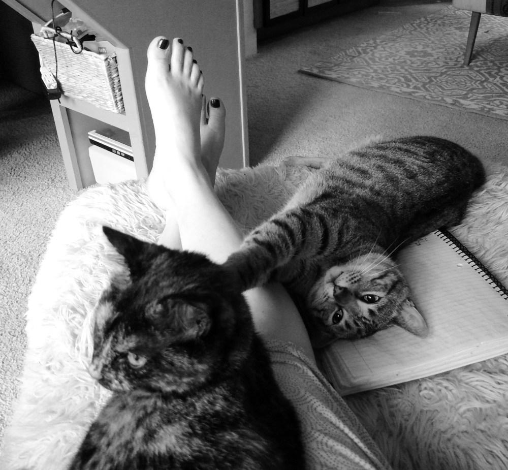 Mother's Day kitties on Shalavee.com