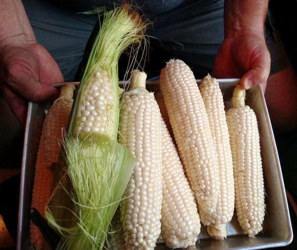 shucked corn on Shalavee.com