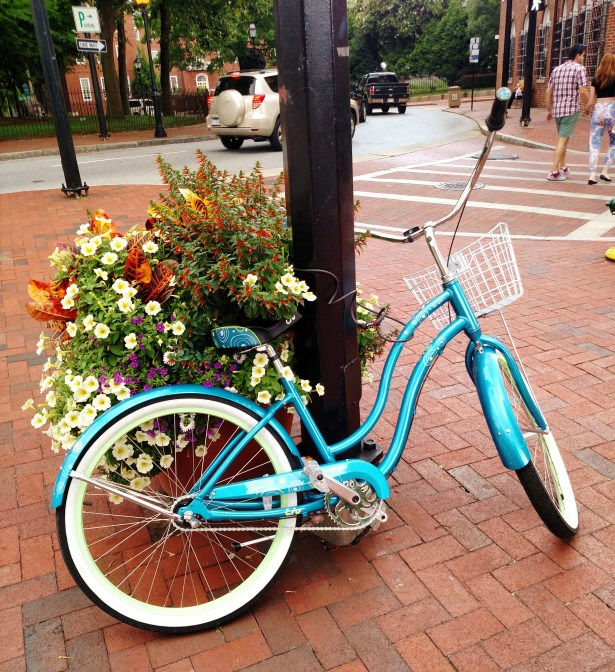 Blue bike in the island in Annapolis on Shalavee.com