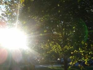 sunshine glare